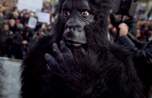 activists-dressed-up-as-gorillas-300x193.jpg